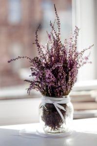 decorar la cocina con plantas
