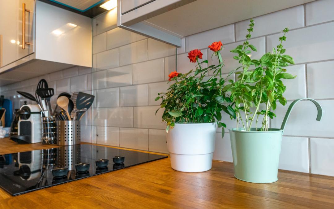 Ideas para colocar plantas en la cocina